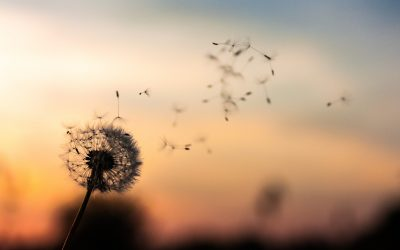 Cultiver le positif ? ou se libérer des mémoires du passé ?